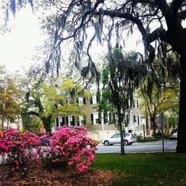 what to do in savannah