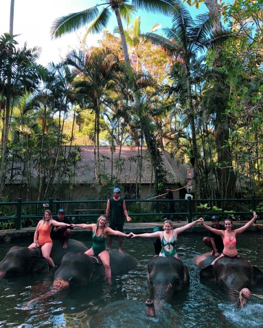 bali elephant park
